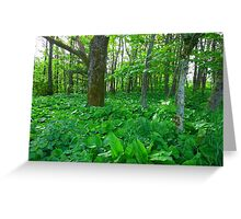 Wooded Area - Lews Castle Grounds Greeting Card