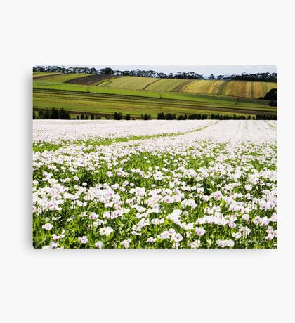 Poppy Field at Table Cape Canvas Print