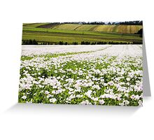 Poppy Field at Table Cape Greeting Card