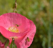 In the pink by Heather Thorsen