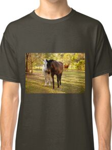 Horses in the paddock Classic T-Shirt