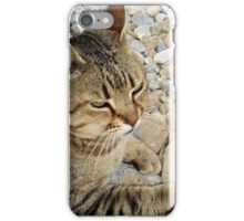 Relaxed Tabby Cat Against Stones and Pebbles iPhone Case/Skin