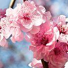 Sakura by Yincinerate