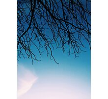 Hanging Branches Photographic Print