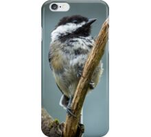 Black Capped Chickadee iPhone Case/Skin
