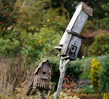 For rent to local bird family: buyer beware! by Rainydayphotos