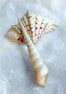 Sea Shells #6 in Color by LouiseK