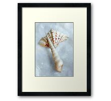 Sea Shells #6 in Color Framed Print