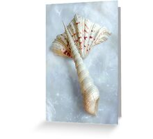 Sea Shells #6 in Color Greeting Card