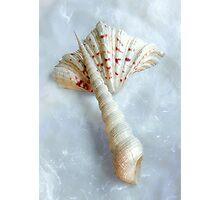 Sea Shells #6 in Color Photographic Print