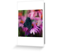 Spicey Swallowtail Butterfly Greeting Card