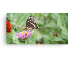Miss Butterfly Canvas Print