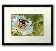 Bee 3 Framed Print