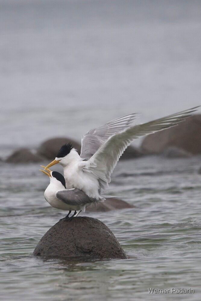 Mating Pair 1 by Werner Padarin