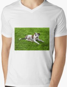 Pit Bull T-Bone Puppy Mens V-Neck T-Shirt