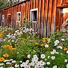Grandma's Barn in the Summer by Randy Richards