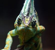 Veiled Chameleon by Thomas F. Gehrke