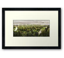 Pinewood after rain Framed Print