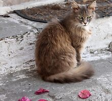 Minding the Bougainvillea  - JUSTART ©  by JUSTART