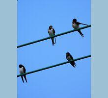 Swallows . Unisex T-Shirt