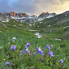 Colorado Wildflower Images - Columbine at American Basin 3 by RobGreebonPhoto
