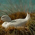 Nesting Ducky by Randy Turnbow