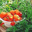 Garden Goodies by Susan S. Kline