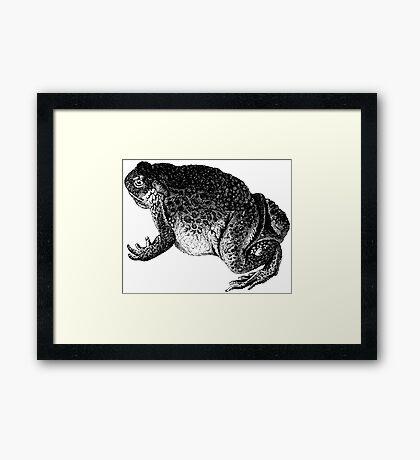 Frodo Toado  Framed Print
