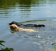 Going For A Swim by WildestArt