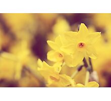Happy Spring - JUSTART © Photographic Print