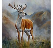 Prince Of The Glen (red stag) Photographic Print