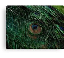 Detailed Macro Peacock Tail Feathers Photograph Canvas Print