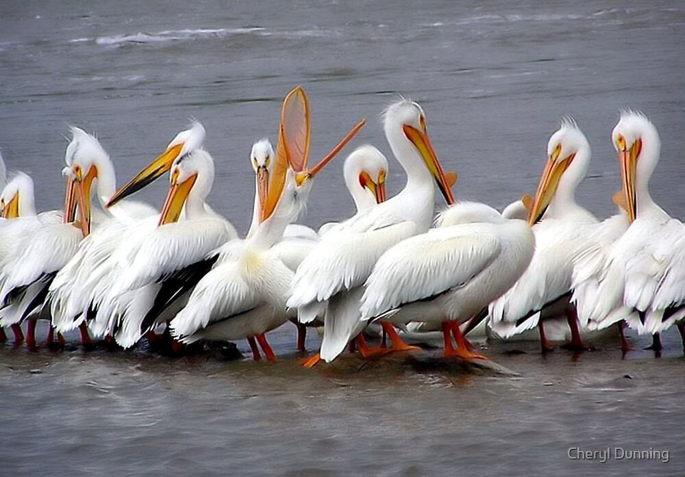 row of pelicans by Cheryl Dunning