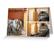 big striped cat or kitten indoors. photo Greeting Card