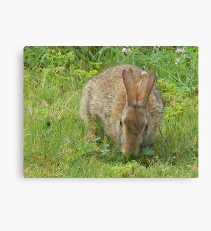 "Marsupial - ish  -  ""Thumper"" Canvas Print"