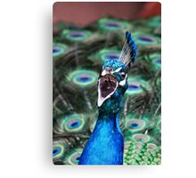 Shouting the Odds Canvas Print