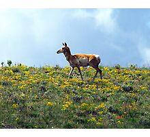 Enjoying The Wild Flowers Photographic Print