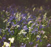 """Colourful Bluebells"" by AbigailChanelle"