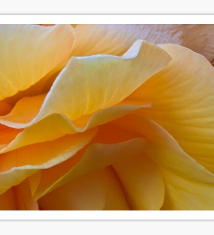Begonia Macro Sticker