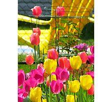 Tea & Tulips Photographic Print