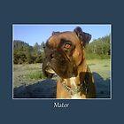 Mater by Lydia Marano