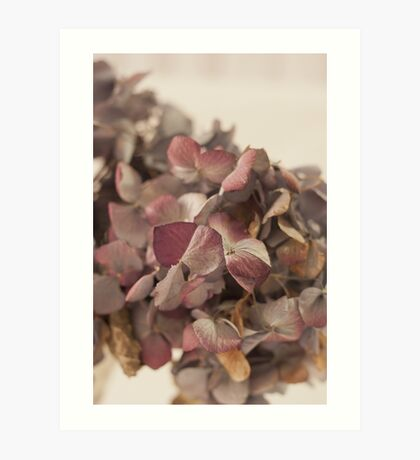 Dried Hydrangea Art Print
