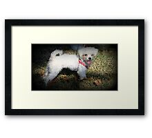 Even Little Dogs Love a Parade!! Framed Print