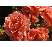 day at the rose garden Photographic Print