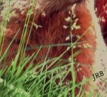 2015. Photography. By. Will Divinely Create/Animal_Groundhog Sticker