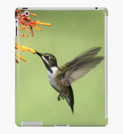 Hummingbird iPad Case/Skin