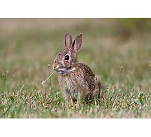 Some bunny cuteness Photographic Print