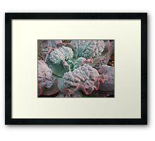 "Echeveria Gibbiflora (a ""Unique"" Type!) Framed Print"
