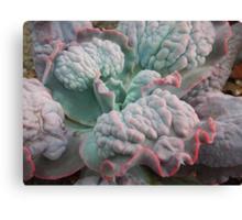 """Echeveria Gibbiflora (a """"Unique"""" Type!) Canvas Print"""