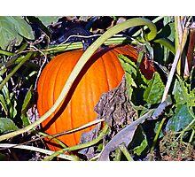 Autumn Harvest Study 2  Photographic Print